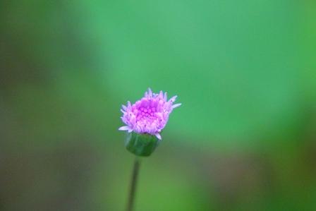紫の花-d DSC04991