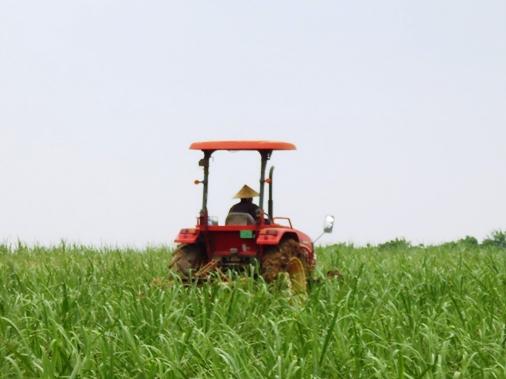P1000810 - 農作業