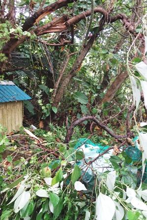 折れた庭木 DSC06271