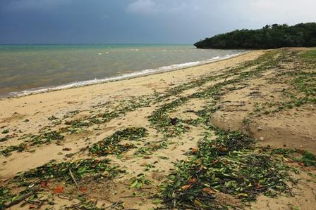 台風翌朝の浜DSC06262