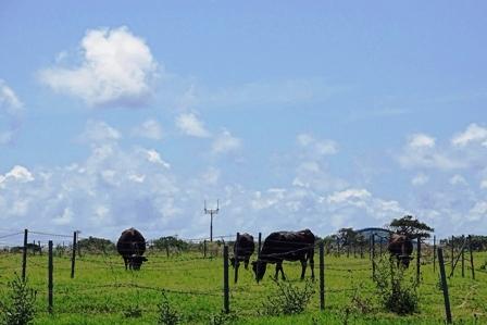 牛さんたち DSC05858