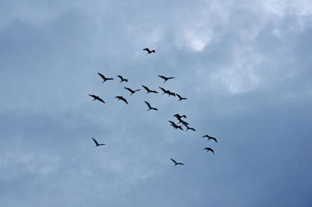 鳥さんたち P1030695