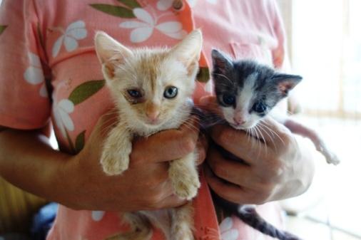 DSC06542 - 2子猫