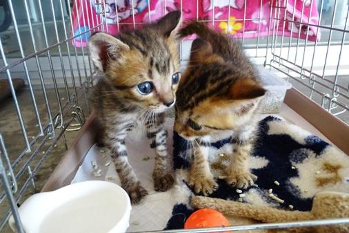 DSC06223 - 2子猫