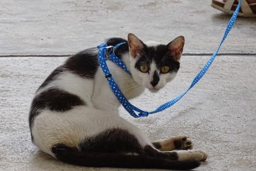 DSC06311 - 白黒成猫