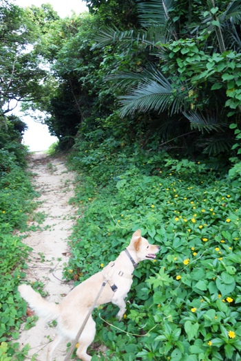 DSC07112 - 散歩
