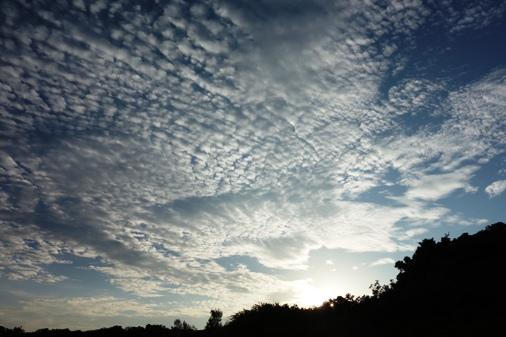 DSC07242 - うろこ雲