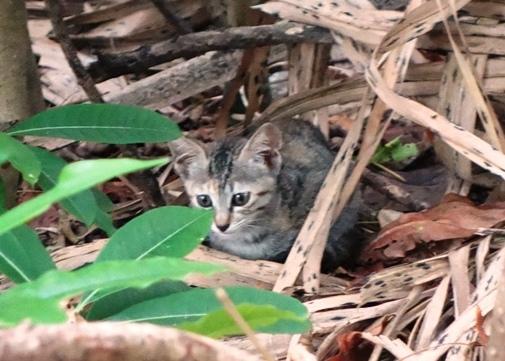 DSC07352 - サザゲ子猫