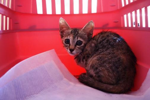 DSC07443 - 保護子猫