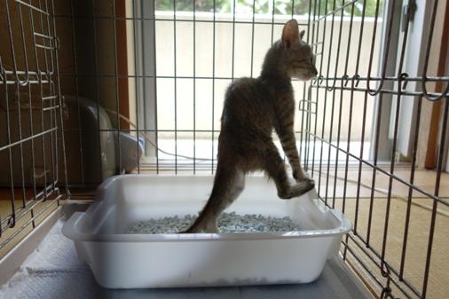 DSC07448 - 保護子猫