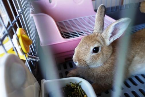 DSC07388 - ウサギさん