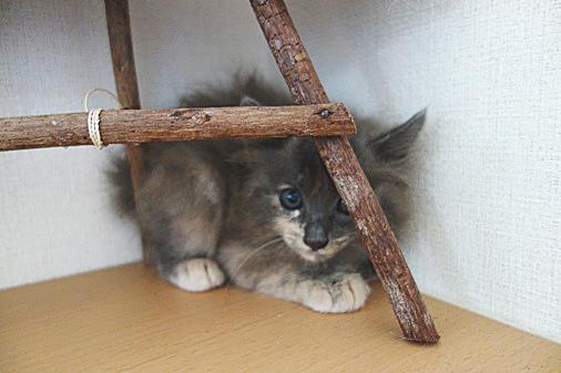 DSC07406 - 子猫