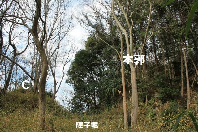 IMG_8912.jpg