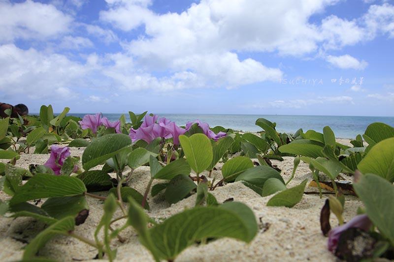 宮古島 砂浜