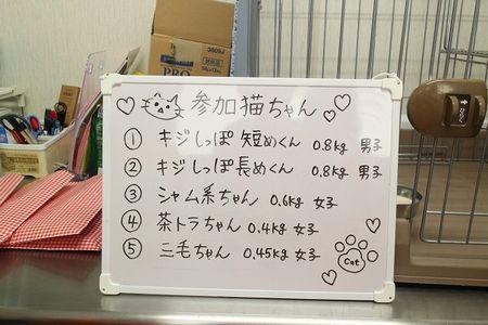 参加子猫紹介ボード150617