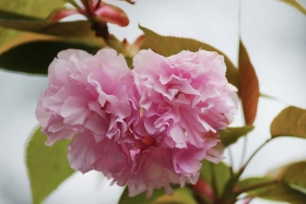 4月17日関山