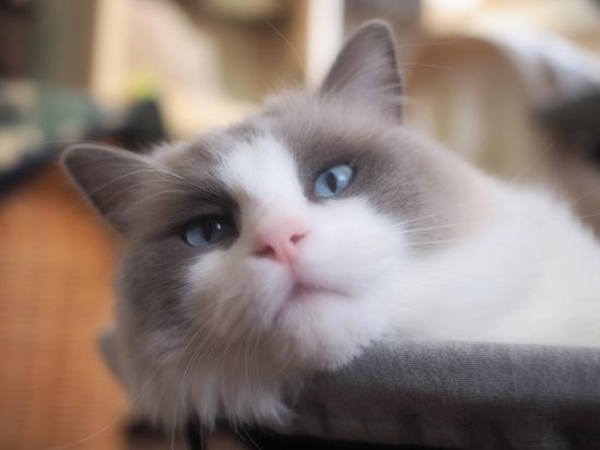 ババの部屋に入って話してると寝床からフーがもったいつけて「おかえりやす」とすりよってくるのを抱きしめて猫チャージ二匹め。