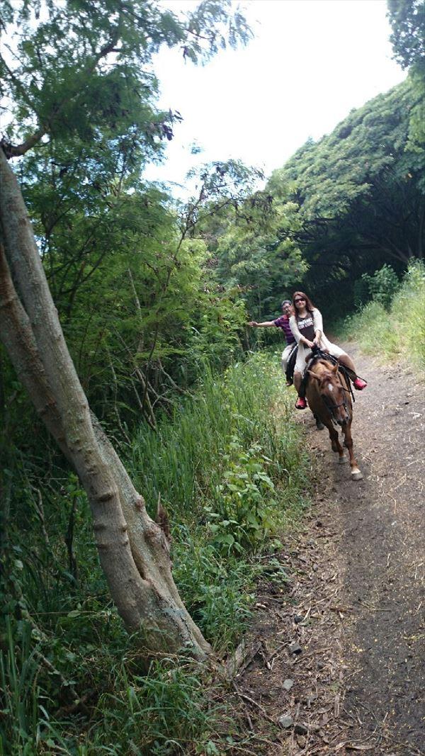 クアロアランチ ハワイ乗馬