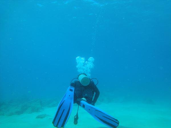 ハワイ ダイビング コオリナ
