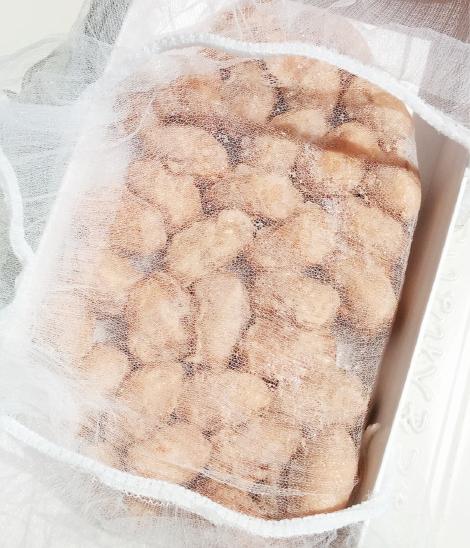 カカオ豆発酵2