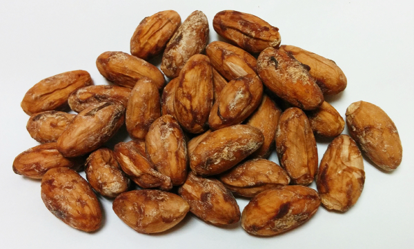 カカオ豆発酵乾燥後