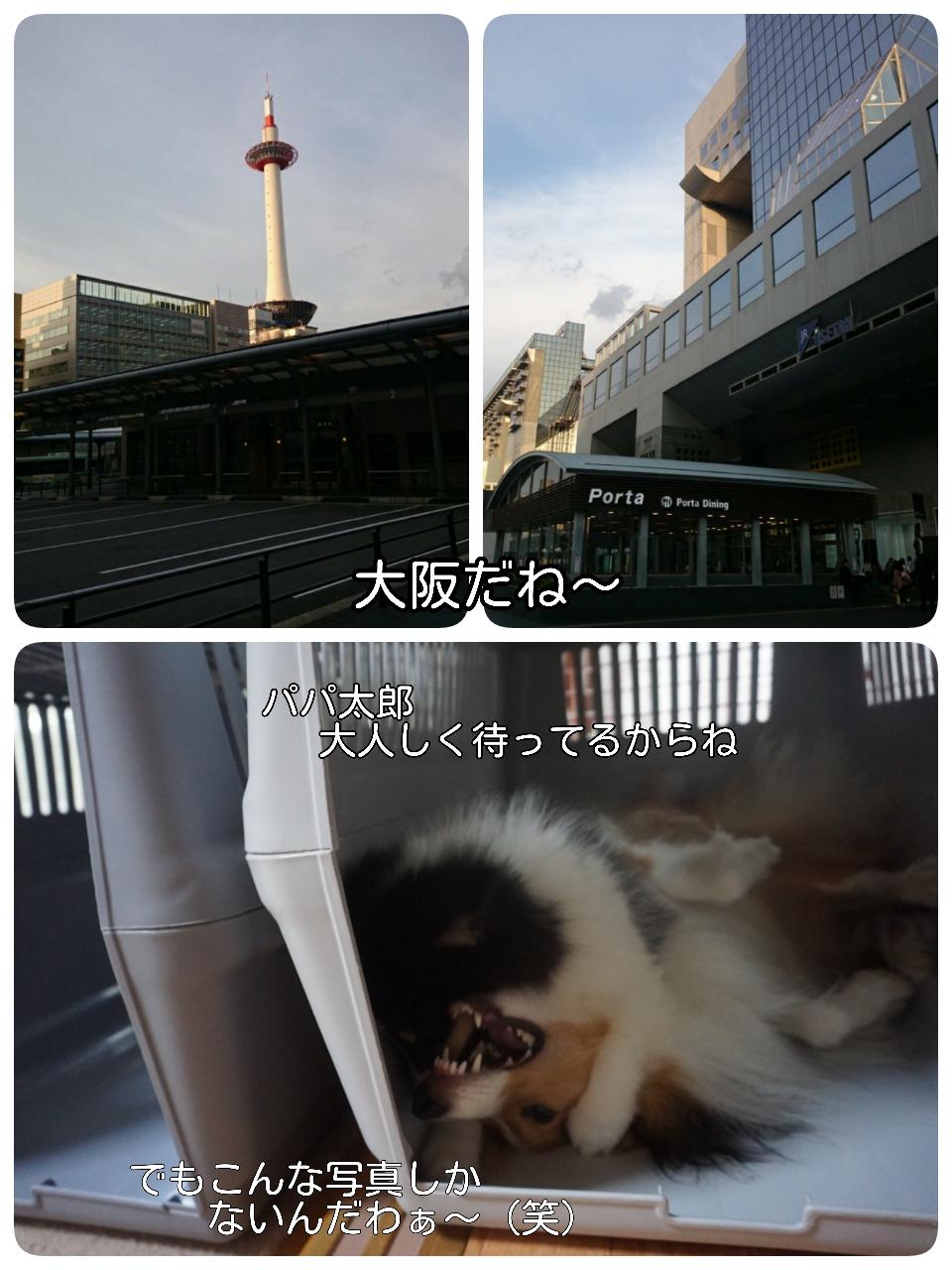 2015-06-02-06-25-59_deco.jpg