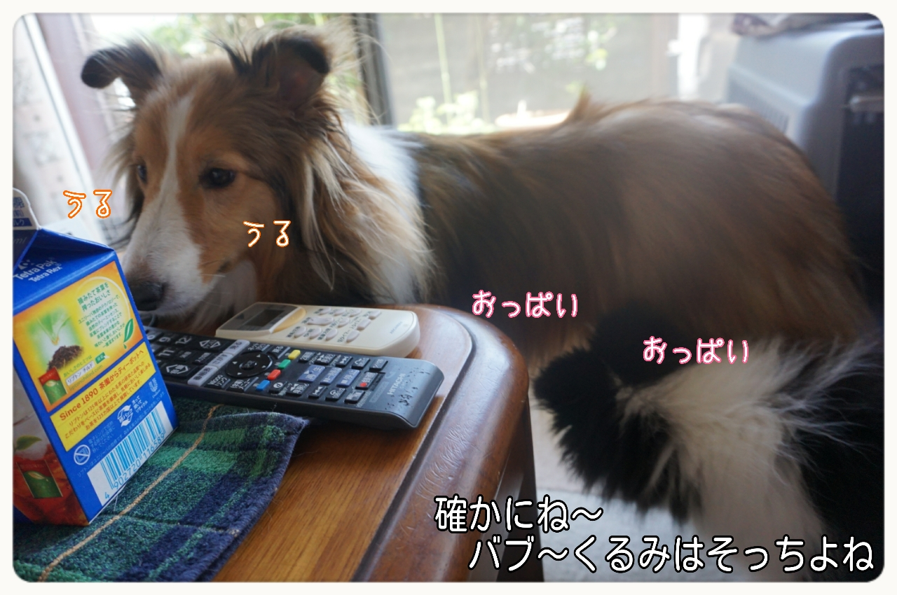 2015-06-02-13-53-57_deco.jpg