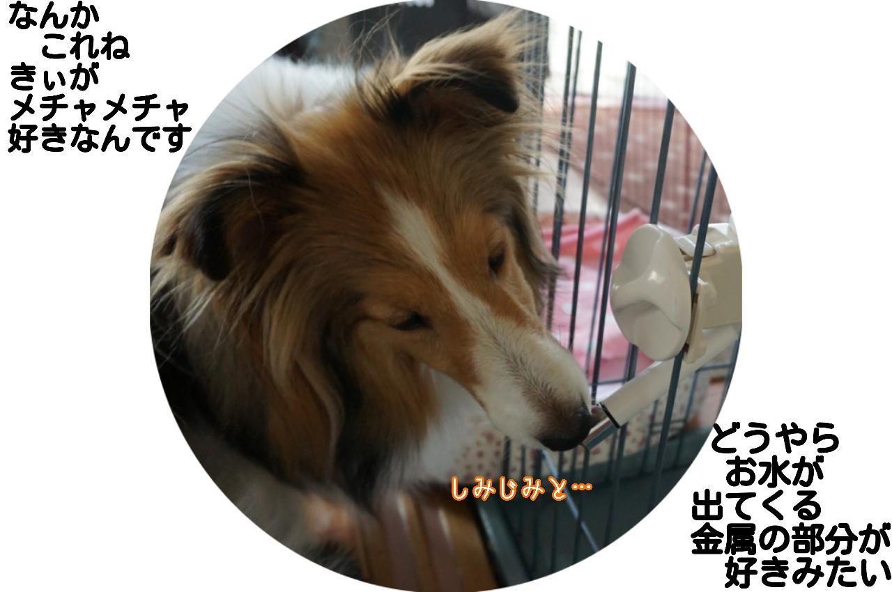 2015-06-05-02-01-39_deco.jpg