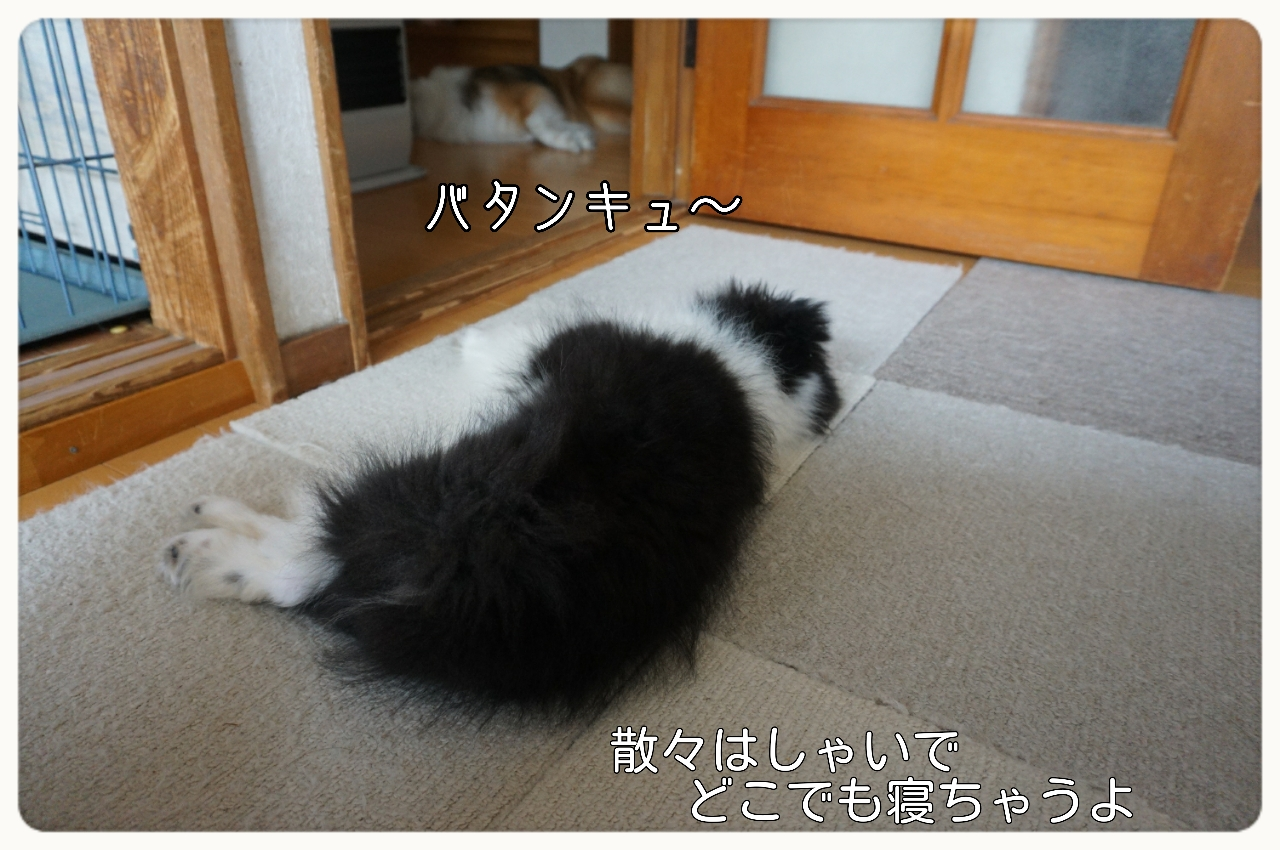 2015-06-08-15-54-55_deco.jpg