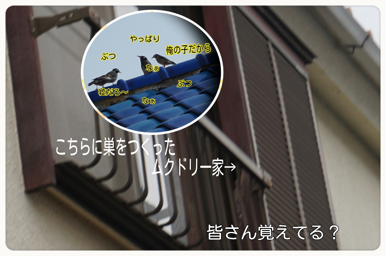 2015-06-08-16-09-58_deco.jpg