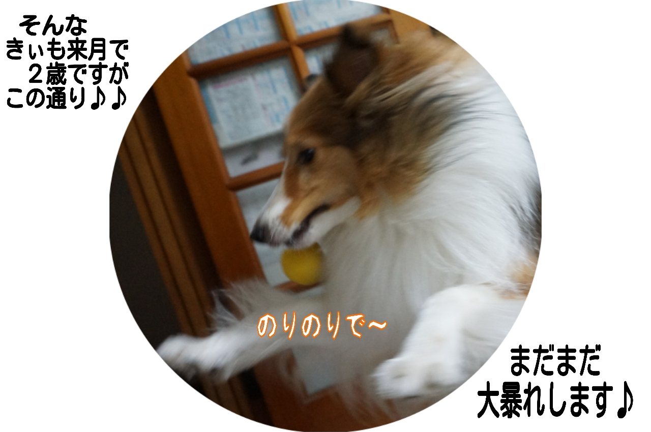 2015-06-17-11-55-55_deco.jpg