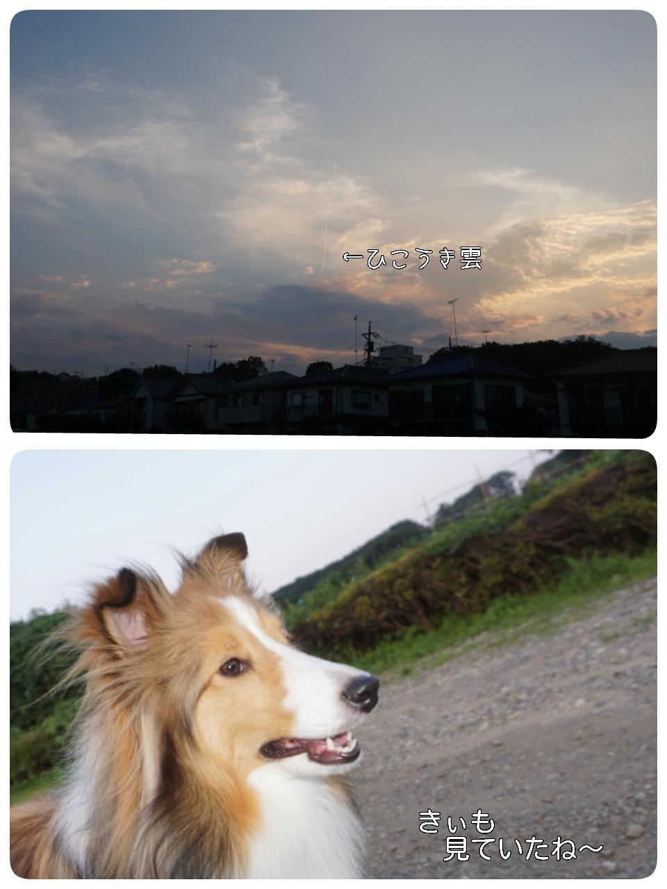 2015-06-24-22-08-38_deco.jpg