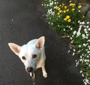 咲と最後の散歩