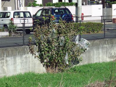 空堀川河川敷の桑の木の謎のビニール袋01