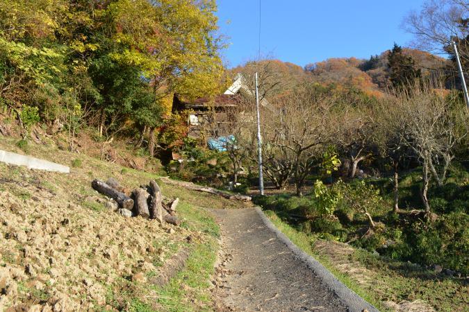 銀杏の木までの道3
