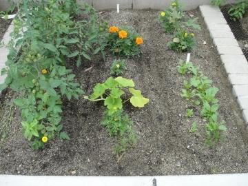 20150620ミニ菜園