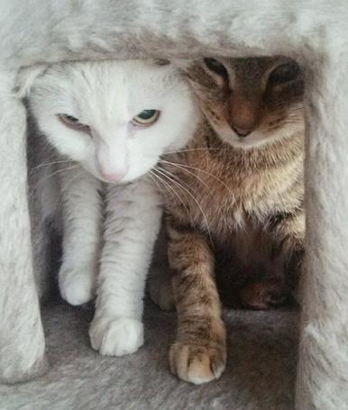 キツキツ&ギュウギュウが楽しい2匹一緒のホームステイ
