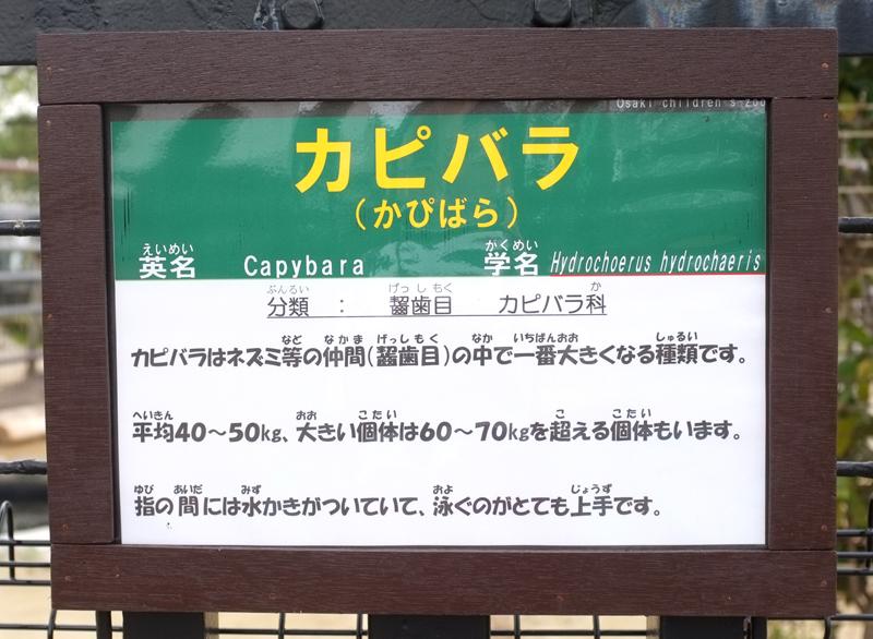 カピバラの紹介