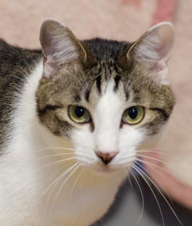 いつも明るく元気なので陽気なイタリア猫と呼んでいます