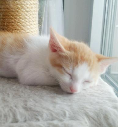 桃太郎くんのおだやかな寝顔にいやされます