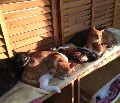 成猫部屋の夕方はみんなお昼寝時間!電気マットの上でウトウト