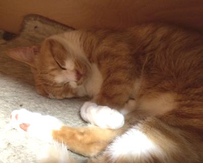 ニャンテ可愛い寝顔!チョコちゃんも白いソックスだね