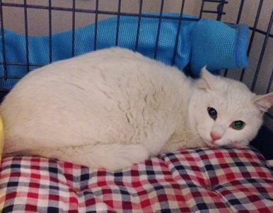 7日間も物置に閉じ込められた白猫ちゃん