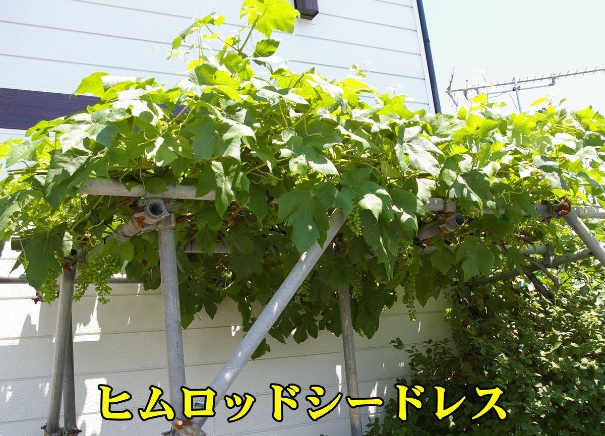 1Himuro150604_004.jpg