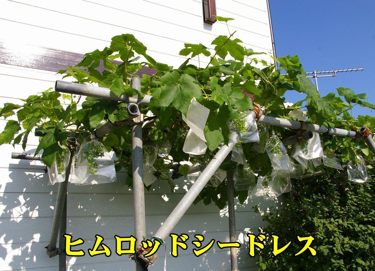 1Himuro150604_008.jpg