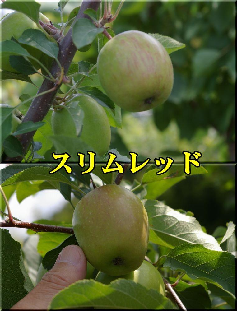 1SR150625_001.jpg