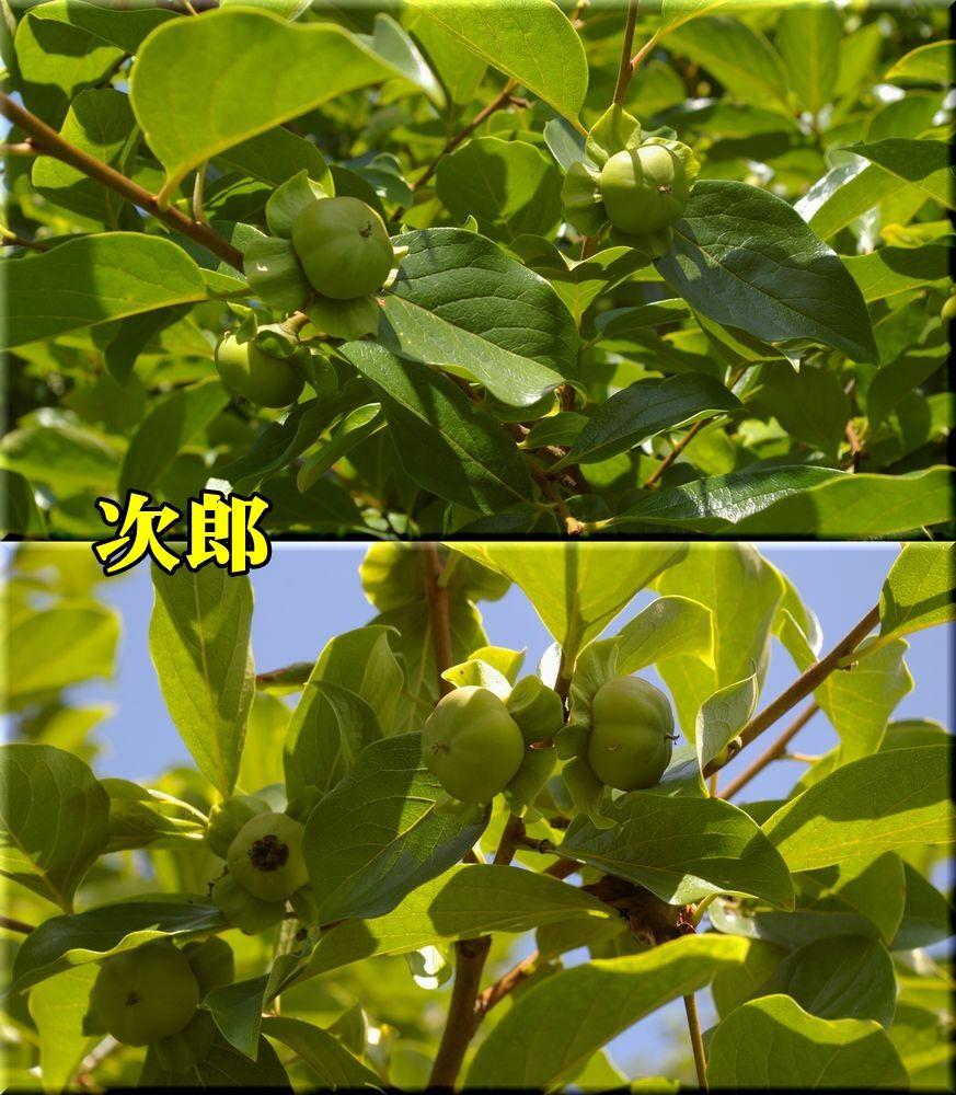 1jirou150622_010.jpg
