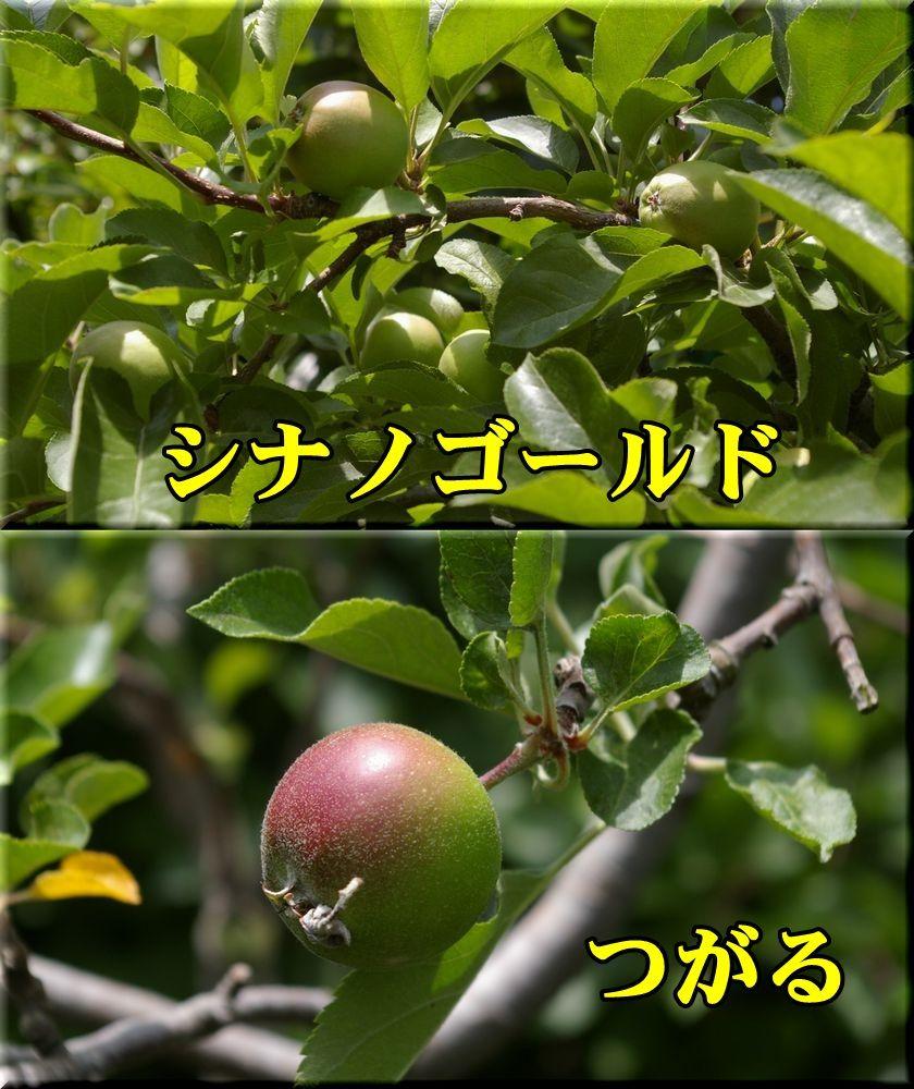 1sinanoG_tugaru_011.jpg