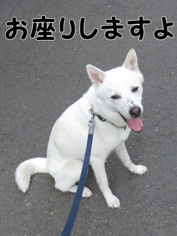 IMG_0555_convert_20150427195547.jpg