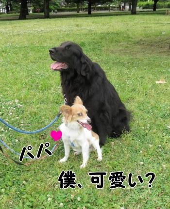 IMG_7023_convert_20150610192223.jpg
